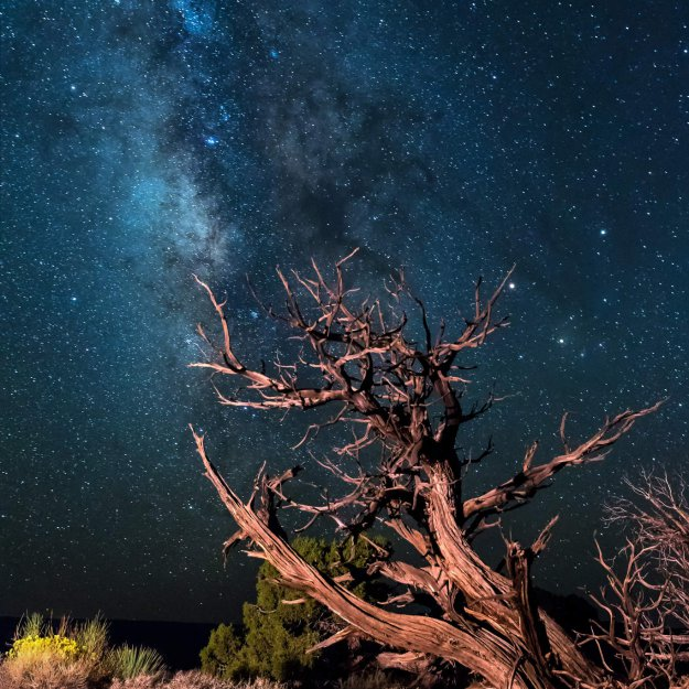 Milky Way Tree